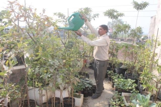 घर की छत पर ऑर्गेनिक खेती कर रहे प्रदीप कुमार बने मिसाल