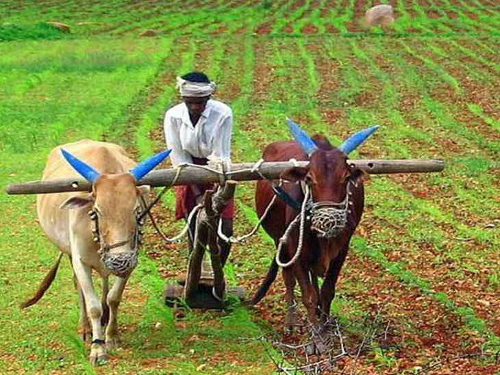 Kisan bulletin 12th February 2019
