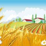 कृषि सुधार के लिए बन सकती है जीएसटी कॉउंसिल जैसी संस्था